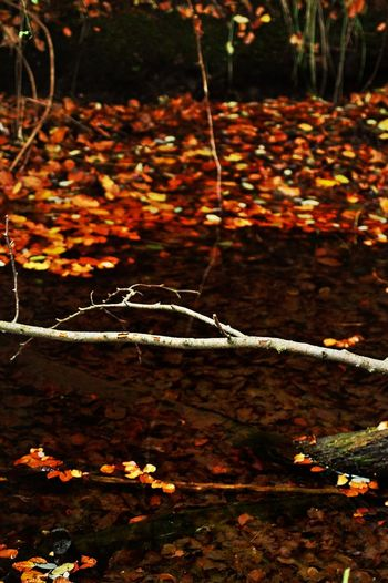 Autumn Leaves Leaves On And Under The Water View On A Creek Water View Into The Clear Water Light And Shadow light and reflection Outdoors Change Close-up Nature Beauty In Nature No People Day