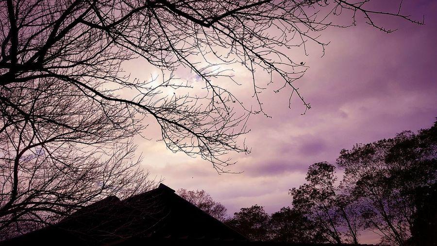Beauty In Nature Branch Düşler Nature Scenics Sky Tranquility Tree