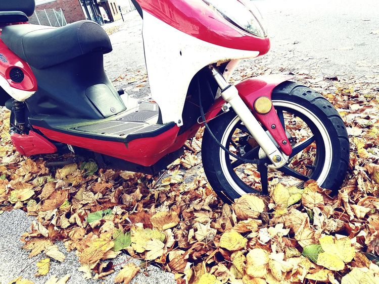 Motorcycle moped autaumn leaves transportation indepedence freedom