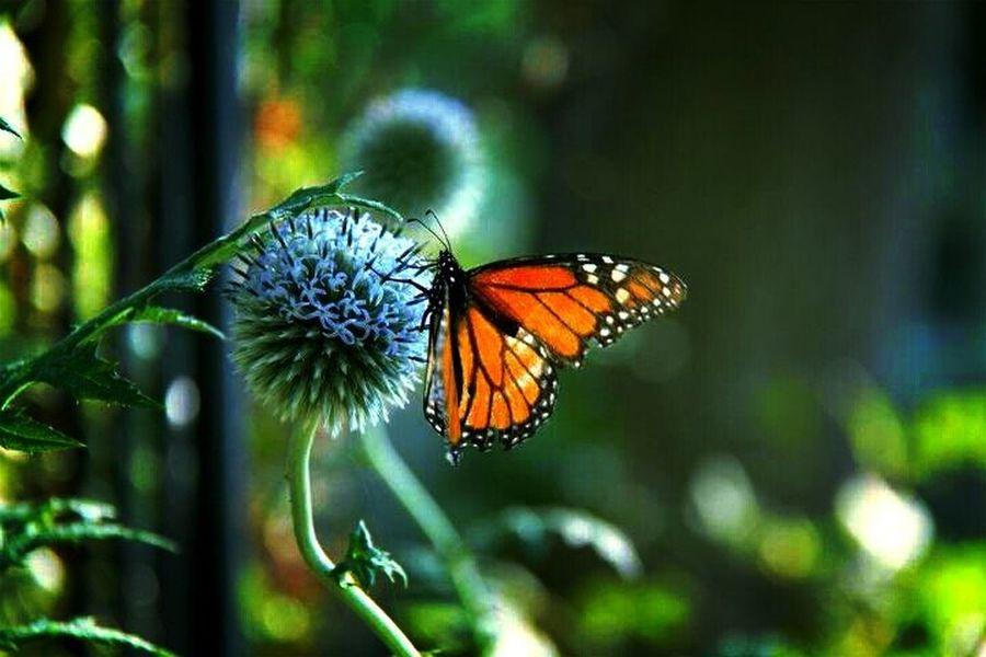 nature photo butterfly