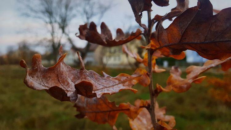 Guben Deutschland Brandenburg Nature Beauty In Nature Winter EyeEm Heute Day Schönes Wetter Deutschland Fotografieren