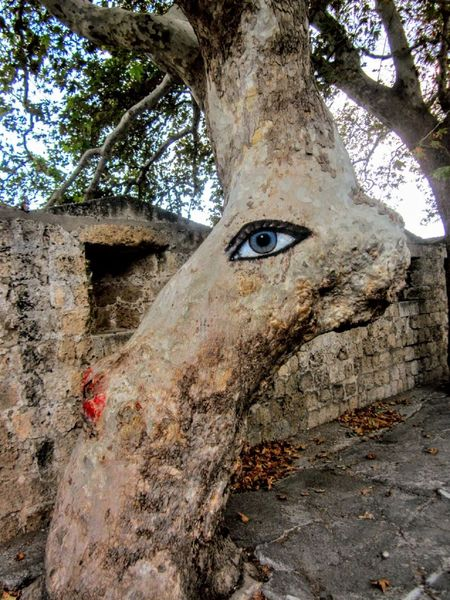 """The """"All-Seeing"""" Tree on the Island of Rhodes, Greece #greece Greek Islands Rhodes, Greece Ródos Close-up Day Nature No People Outdoors Tree Tree Art Tree Trunk"""
