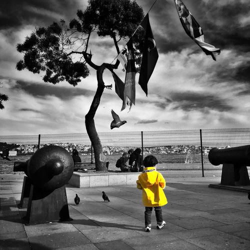 Besiktas Landscape Bosphorus Boy EyeEm Birds Birds