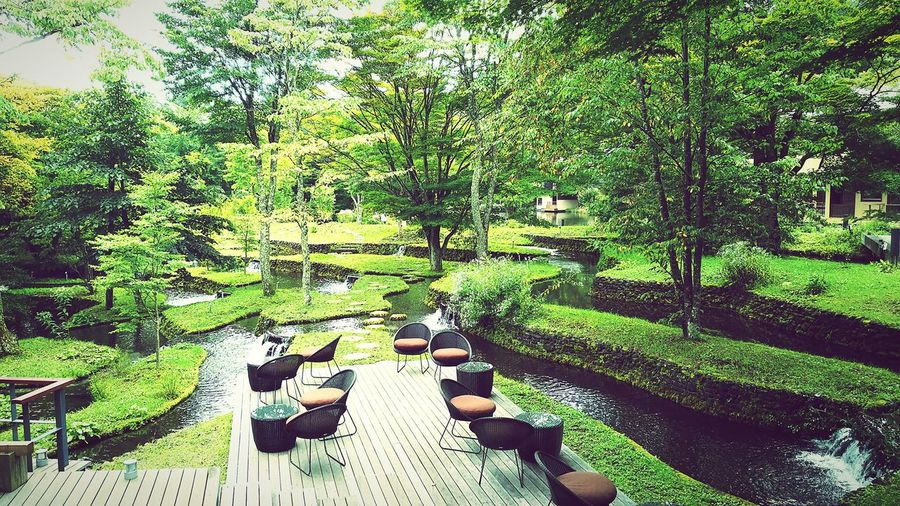 Tree Green Color Formal Garden Water Growth Park - Man Made Space Nature Beauty In Nature Garden Ornamental Garden Japanese Style Park Architectural Design Japanes Trips Enjoying Life Relaxing Beautiful View Hi! Hello World Great Day