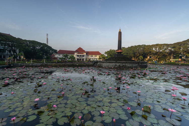 View of water lilies in city against sky