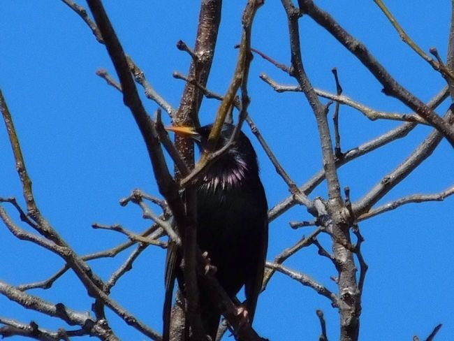 Birds in the neighbors yard... Streamzoofamily Massachusetts April Birdwatching Bird Photography Nature_collection Birds Enjoying Life EyeEm Nature Lover Spring