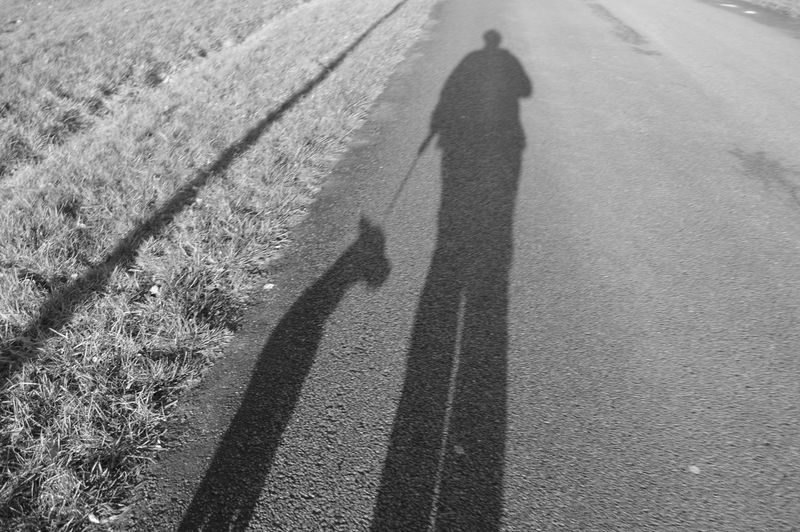 High angle view of pet owner with dog shadow on road