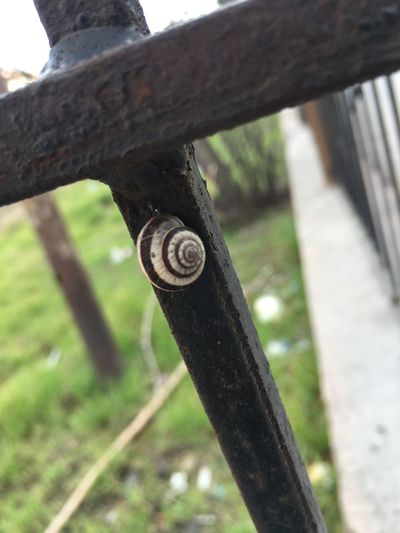 Pro take presents for you Protake Focus On Foreground Day Metal Close-up Mollusk Snail Gastropod No People Architecture Invertebrate Old Wood - Material Shell Outdoors Plant Nature Animal Wildlife Tree Rusty Nut - Fastener