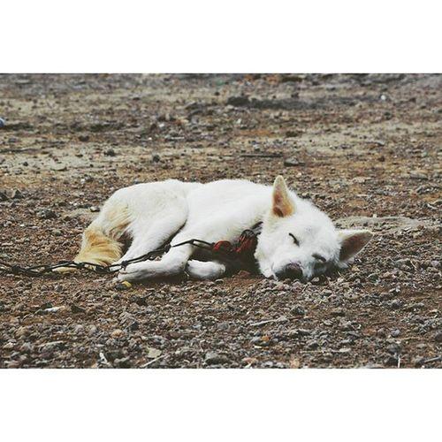 Sleep is the best medicine - Dalai Lama Location - Naneghat, Pune, India IndiaJourney