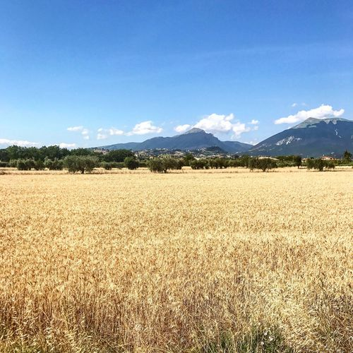 Campo di grano Sky Land Landscape Scenics - Nature Tranquil Scene Nature Agriculture Field Rural Scene Blue Mountain EyeEmNewHere A New Beginning