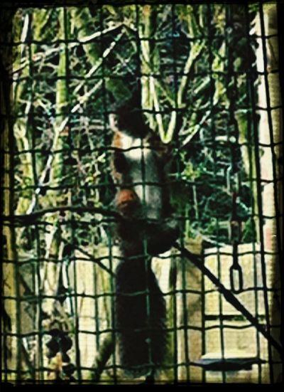 Eekhoorn op pindajacht in de achtertuin. Mijn Tuin The World Around Me Nature Dieren