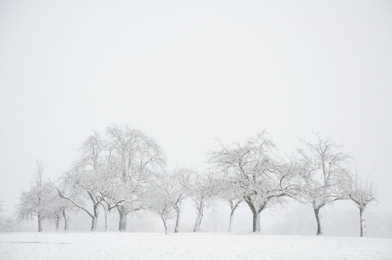 Winter Bare Tree Beauty In Nature Branch Cold Temperature Graphic Nature Group Of Trees Outdoors Scenics Snow Snow Covered Bare Trees Snow Covered Landscape Tranquil Scene Weather White Sky Winter Winter Wonderland