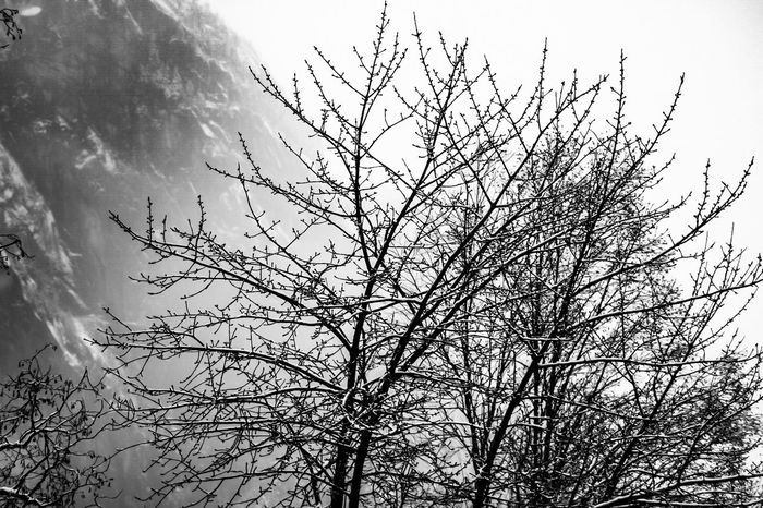 Black and white Dark Backgrounds Beautiful Beauty In Nature Blackandwhite Black White Fog Mountain Snow Tree Low Angle View Nature Branch Bare Tree Sky Beauty In Nature Tree Outdoors No People Growth Day Tranquility Bird Animal Themes