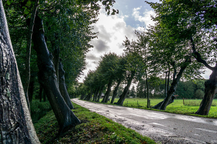 oblique road trees Bäume Road Beauty In Nature Day Grass Green Color Growth Landscape Landstrasse Nature No People Oblique Outdoors Road Scenics Schief Schiefe Bäume Sky Straße The Way Forward Tranquil Scene Tranquility Tree Tree Trunk
