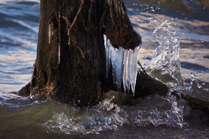 Water Nature Passionefotografia Passionforphotography Passione_fotografica Passionefoto Passionefotografa Ice Ghiaccio Lago Trasimeno