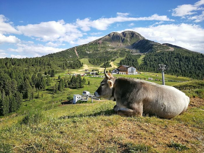 Cow Cattle Animal Farm Dolomites Hill Cloud South Tyrol Bolzano Nature Alps Alpine Italy Mountain Agriculture Field Sky Landscape Cloud - Sky Tranquility Scenics Tranquil Scene Mountain Range Farmland Idyllic Agricultural Field Countryside Calm Remote Non-urban Scene