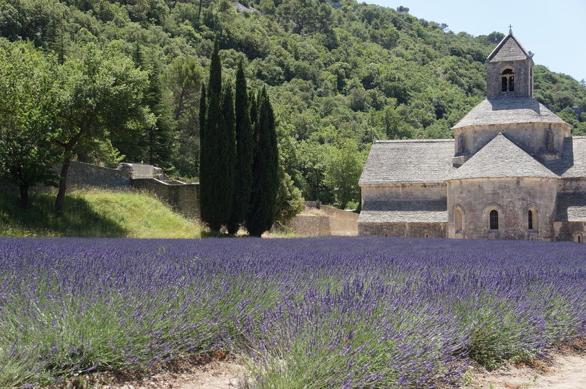 Architecture Beauty In Nature Built Structure Field Flower Lavender Nature No People Place Of Worship Sky Spirituality