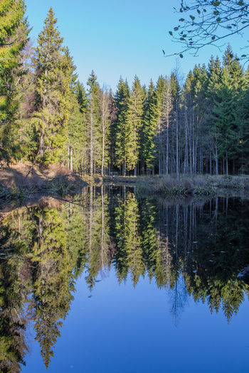 Beauty In Nature Clear Sky Day Lake Nature No People Outdoors Reflection Reflection Lake Scenics Symmetry Tranquility Tree Water Waterfront