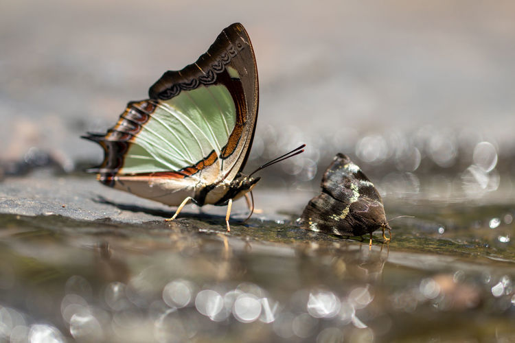 Close-up of moth and butterfly by water