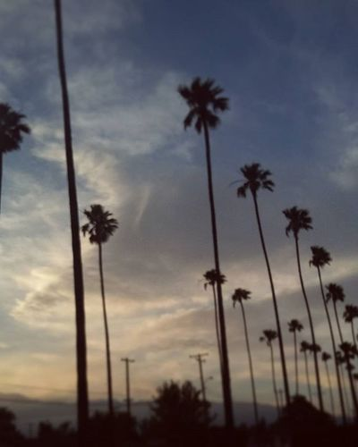 Palm trees :) Californiasky