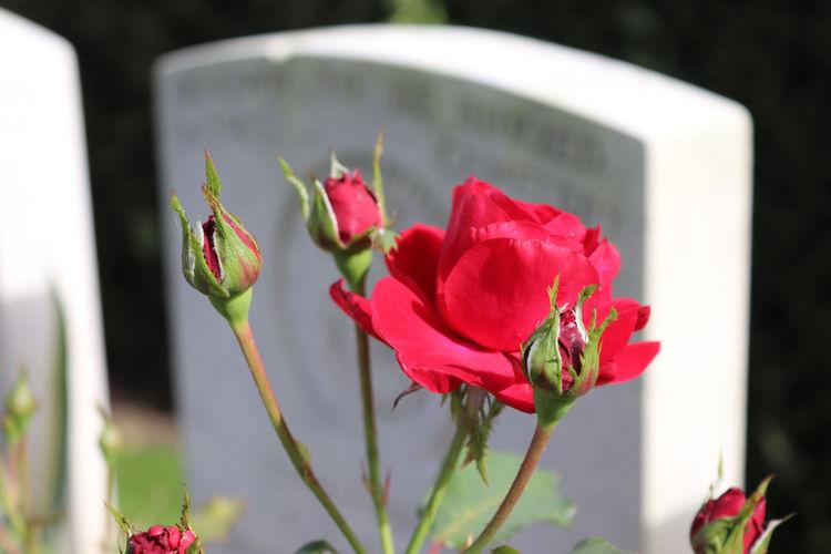 War Grave Ypres Beauty In Nature Close-up Flower Flower Arrangement Flowering Plant Fragility Vulnerability  Ww1 Memorial Ww2