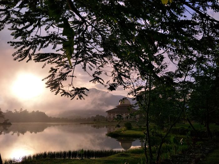 sunrise Tree Water Lake Reflection Branch Sky Landscape Reflection Lake Dawn