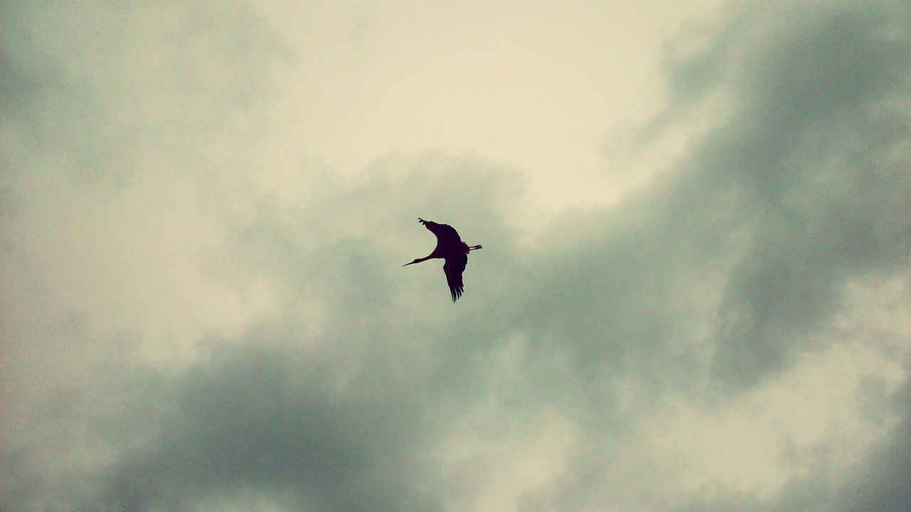 flying, bird, low angle view, animals in the wild, one animal, spread wings, sky, animal themes, wildlife, mid-air, nature, cloud - sky, animal wildlife, outdoors, day, no people, beauty in nature, bird of prey