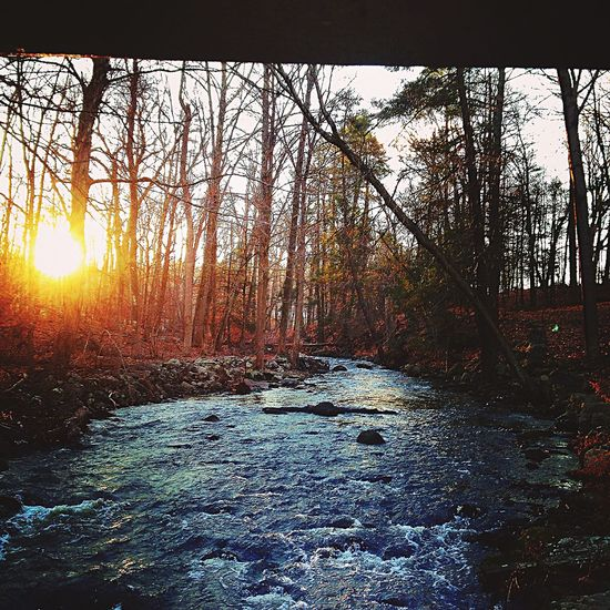 Over the brook Trail Running Woods Trailrunning Running Trail Nature Forest Trees Tree Solitude Sun Sunrise River Dawn