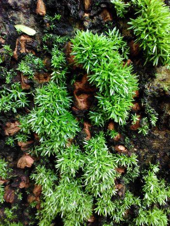 close up moss Moss & Lichen Natural Green  Nature Photography Mossporn