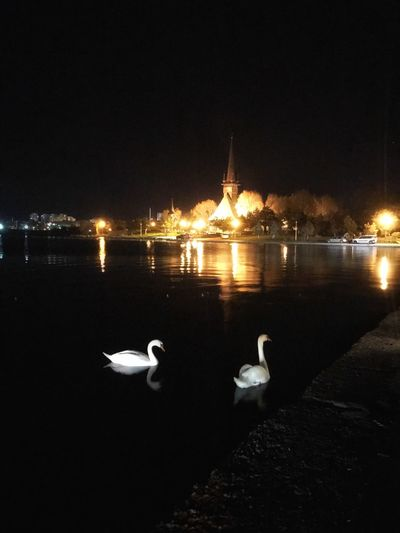 Night Water Reflection Bird Swans Swans On The Lake Animal Themes Animals In The Wild No People Illuminated Outdoors Nature Animal Wildlife Swan Welcome To Black EyeEmNewHere