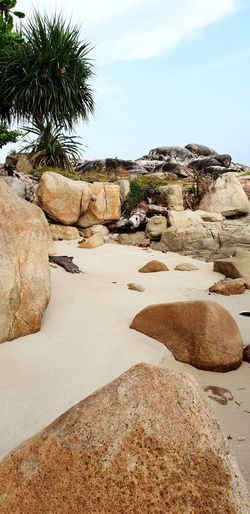 lost island? #beach #Island #lostisland #secretbeach #sand #stoneage #sea #seasandantree #coconuttree First Eyeem Photo