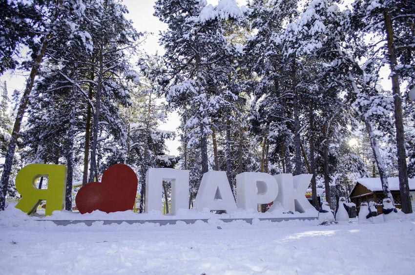 Snow Winter Yakutsk Yakutia Park
