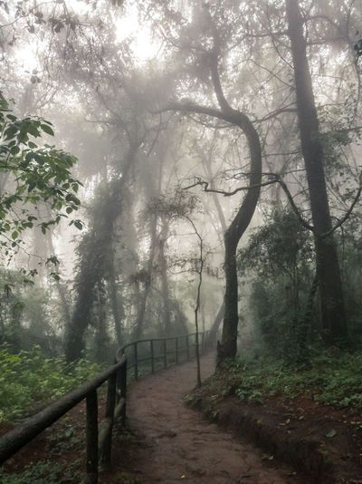 Road Fog Tree Nature Outdoors No People Beauty In Nature Forest Plant Scenics Cerro Alux Thriller Scary Stuff
