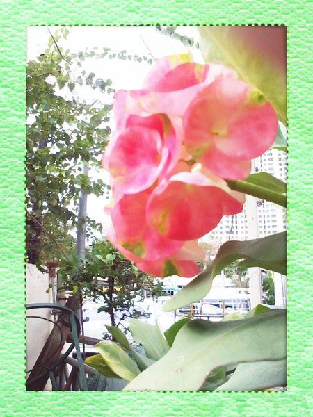 Flower chainise floer Taking Photos