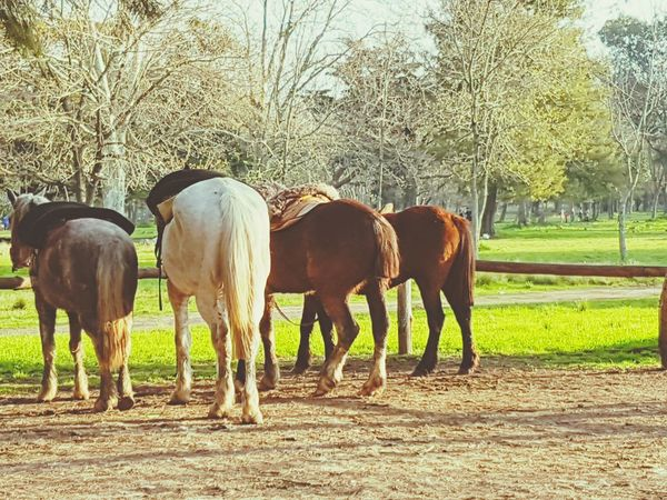 Caballos 🐎🐎👢 PhonePhotography Photography Tranquility Relaxing Moments