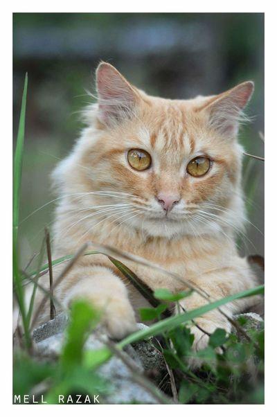 Cat. Cat♡ Cats 🐱 Cat Photography Cat Lovers Cats Vscomalaysia Vscoperak VSCO Vscocam Vscomalaysian