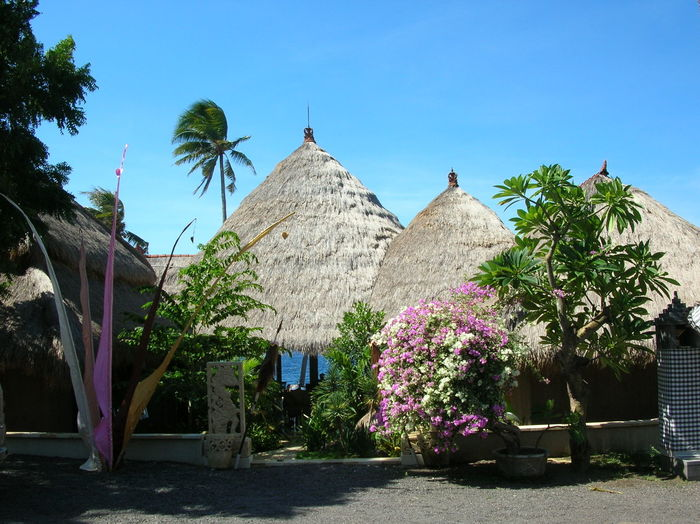A cluster of thatch roofed huts