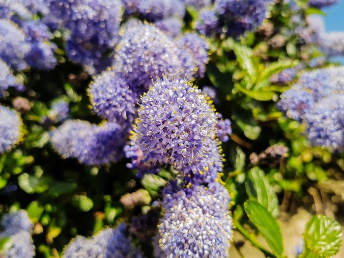 Feel the spring 😎 Flower Purple Plant Part Nature Plant Alternative Medicine Outdoor Pursuit Botany Beauty In Nature Nature Reserve Outdoors Eco Tourism Botanical Garden Day Close-up No People Photography Themes Herbal Medicine Flower Head Fragility S8 Collection