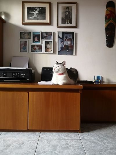 Cat sitting on table at home
