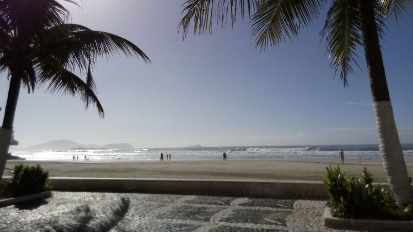 Summer Palm Tree Beach Sea Travel Destinations Vacations Sunlight Summer Vacations