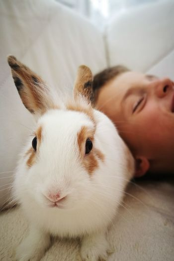 Close-up portrait of rabbit with boy at home