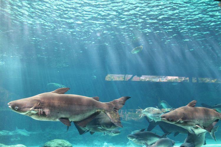 UnderSea Water Sea Life Underwater Sea Swimming Scuba Diving Eating