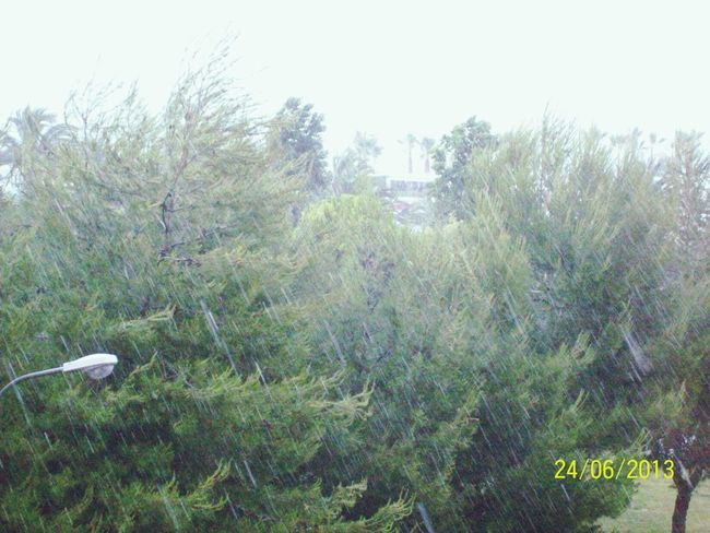 RainyDay Tree Past Last Summer