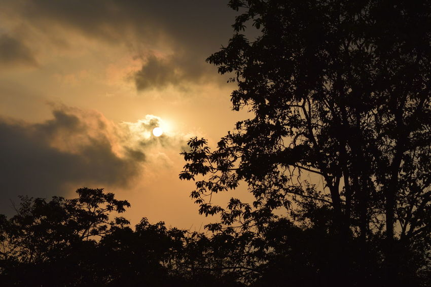 evening when sun is about to leave the town Sun Sunset Orange Treee Astronomy Tree Moon Sunset Forest Sky