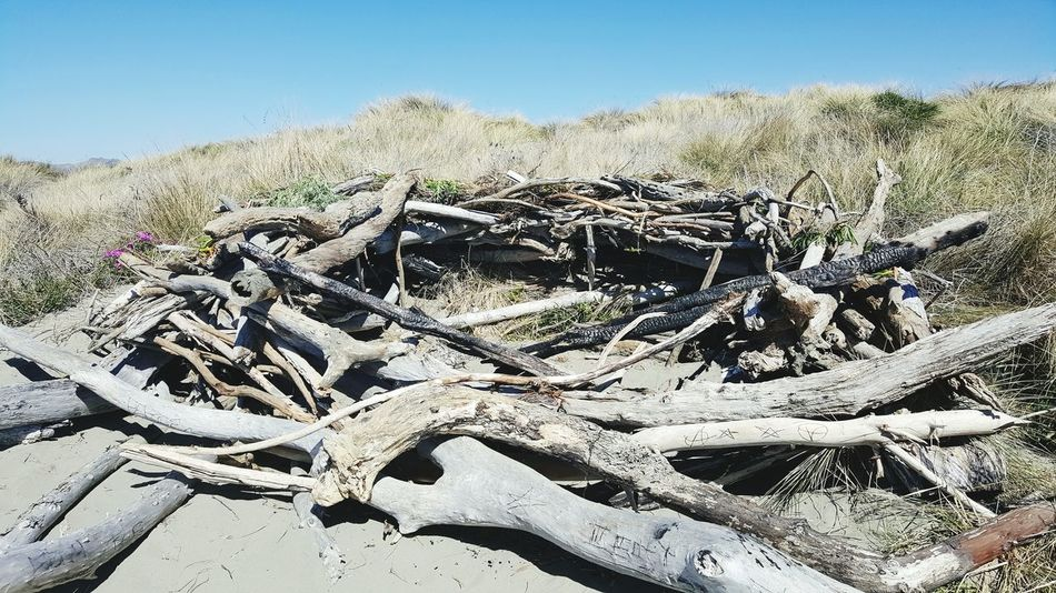 Gaint nest