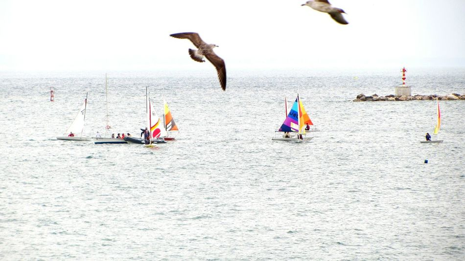Boats and the flying seaguls... Boats⛵️ Flying Seagull Taking Pictures Taking Photos