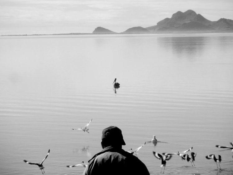 Black & White Empalme Sonora Nostalgic Landscape Sonora Birds Blackandwhite Fisherman Mountains One Person Sea