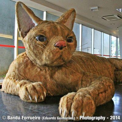 Gato Exposição Parqueibirapuera Cidadedesaopaulo fotografia animais