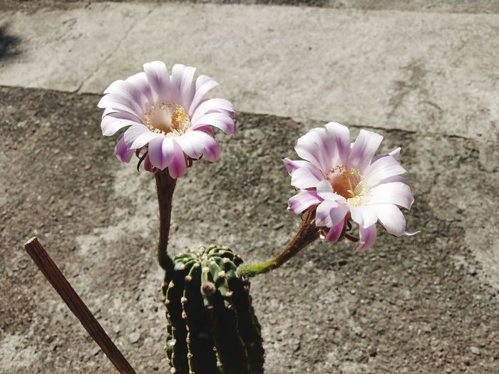 Flower Head Flower Petal Springtime Close-up Plant