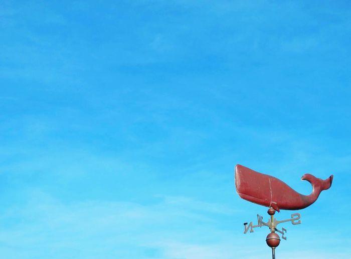 Anemoscope Wind Vane Whale Whale Wind Vane Blue Sky Charlottetown Pei Prince Edward Island Canada Travel Photography